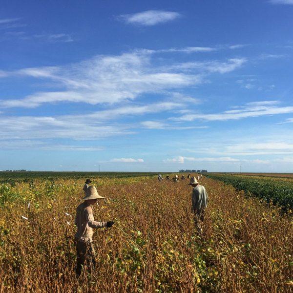 Abiove reduz previsão para safra e exportação de soja em 2019