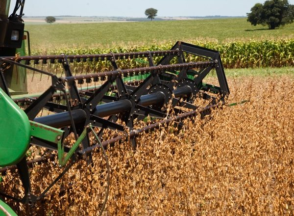 Colheita da safra 18/19 de soja atinge 5,62% em Mato Grosso; acima da média