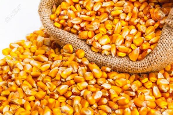 Cotação do milho abre a sexta-feira em baixa nas bolsas