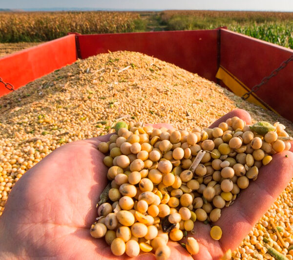 """Colheita de soja no Brasil avança """"bem"""" para 9% da área, diz AgRural"""